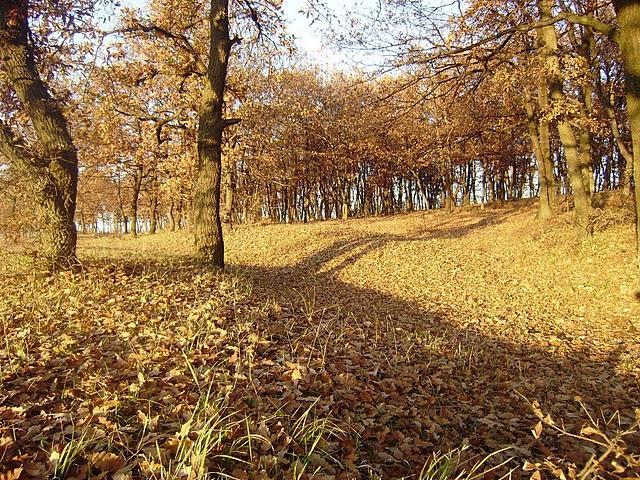 Fall in Easter Rhodopes by Mihaela Kircheva