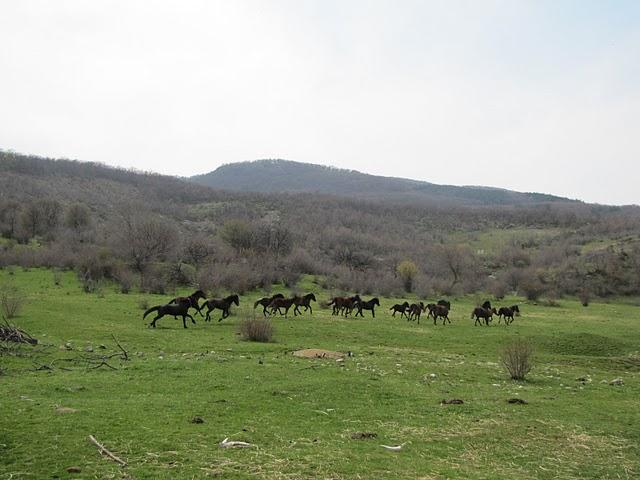 Semi-wild horses from the herd in Chernichino wild area (Photo: Dessislava Kostadinova)