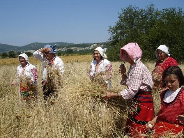 Reconstruction of a spelt harvest near to the village of Rabovo (Photo: Iva Tontcheva)