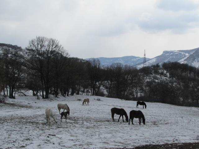 Horses in the winter (pic. Dessislava Kostadinova)