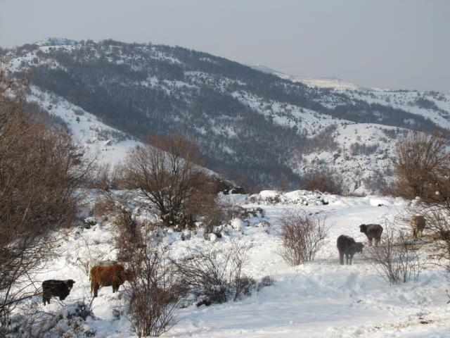 Winter in the village of Chal (pic. Dessislava Kostadinova)