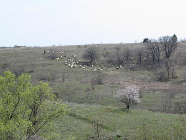 View from the village of Kostilkovo (pic. Dessislava Kostadinova)