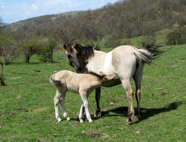Foal in the village of Sbor (pic. Hristo Hristov)