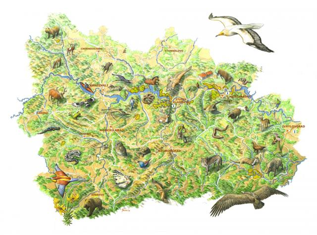 The rich biodiversity of the Eastern Rhodopes by the Dutch artist Jeroen Helmer